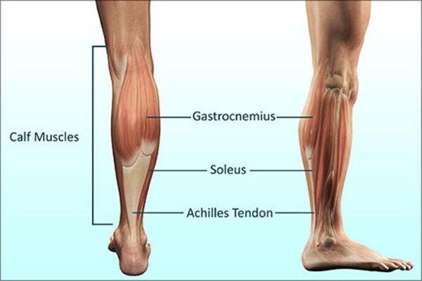 Phần lớn cơ bắp chân là cơ chậm nên việc tập với lực ép mạnh, nhanh sẽ không hiệu quả
