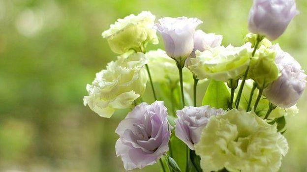 Tặng hoa Cát Tường vào những dịp đặc biệt