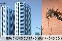 Chung cư tầng mấy không có muỗi