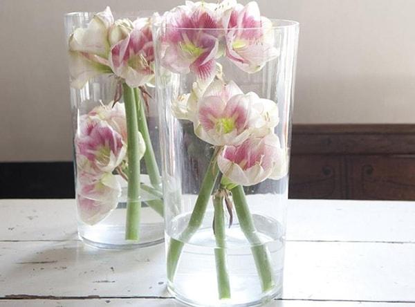 Một vài mẹo chăm sóc hoa giúp hoa tươi lâu